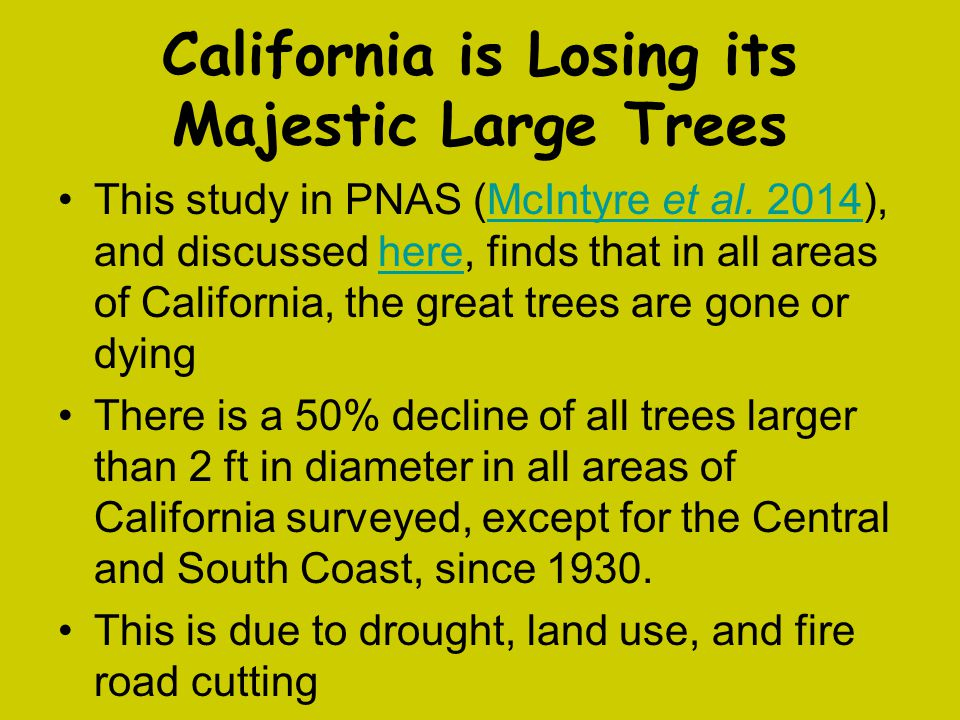 California is Losing its Majestic Large Trees