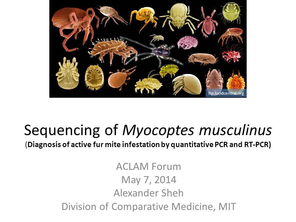 Division of Comparative Medicine, MIT