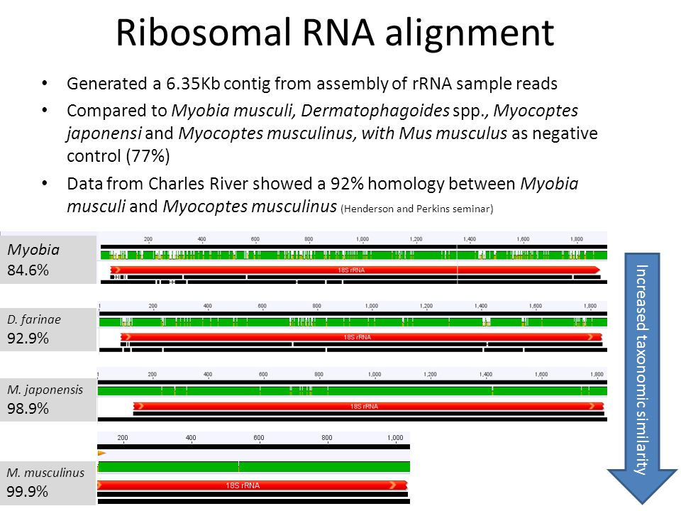 Ribosomal RNA alignment