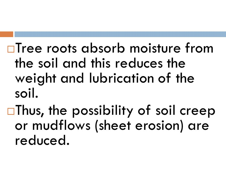 Tree roots absorb moisture from the soil and this reduces the weight and lubrication of the soil.