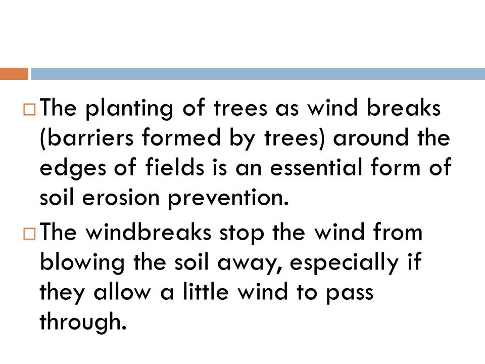 The planting of trees as wind breaks (barriers formed by trees) around the edges of fields is an essential form of soil erosion prevention.