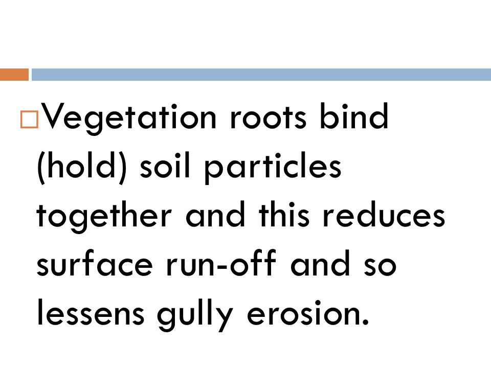 Vegetation roots bind (hold) soil particles together and this reduces surface run-off and so lessens gully erosion.