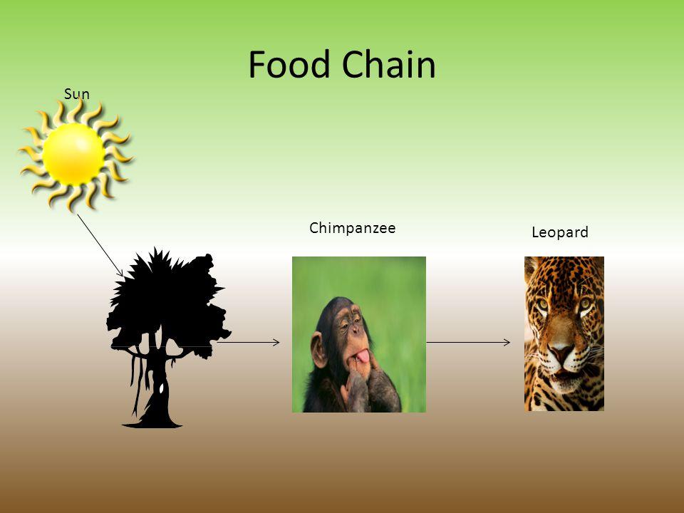 Food Chain Sun Chimpanzee Leopard Fig Tree