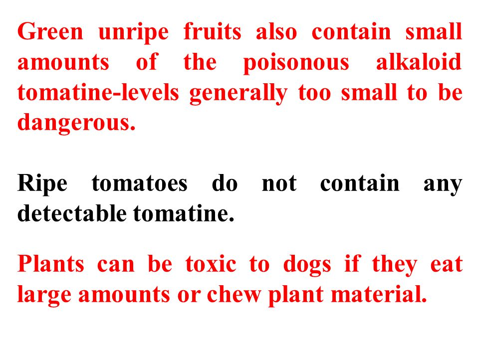 Green unripe fruits also contain small amounts of the poisonous alkaloid tomatine-levels generally too small to be dangerous.