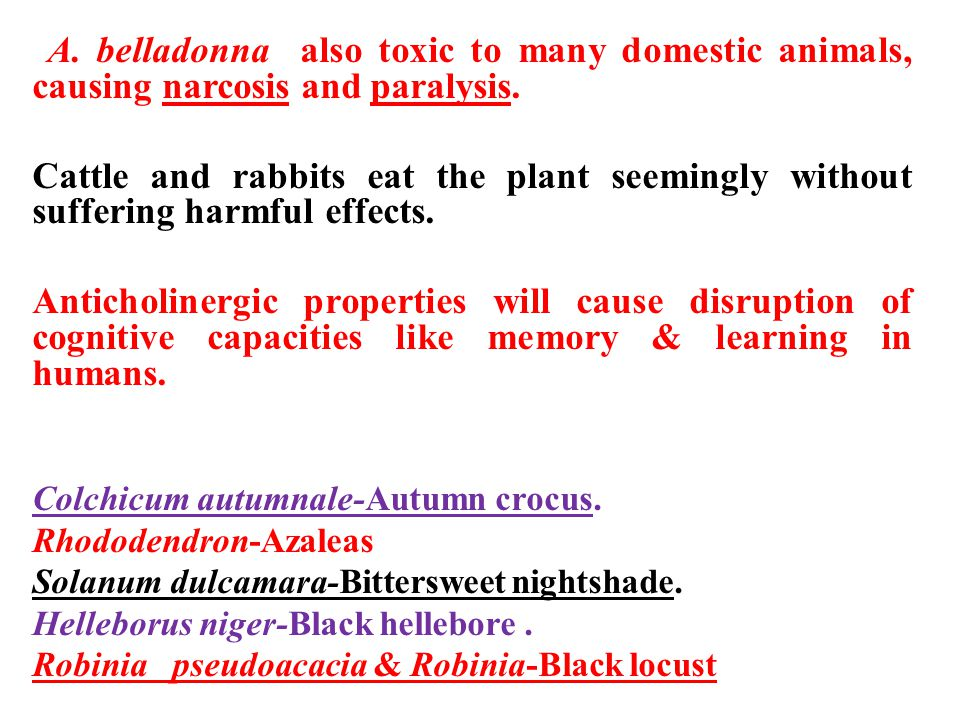 A. belladonna also toxic to many domestic animals, causing narcosis and paralysis.