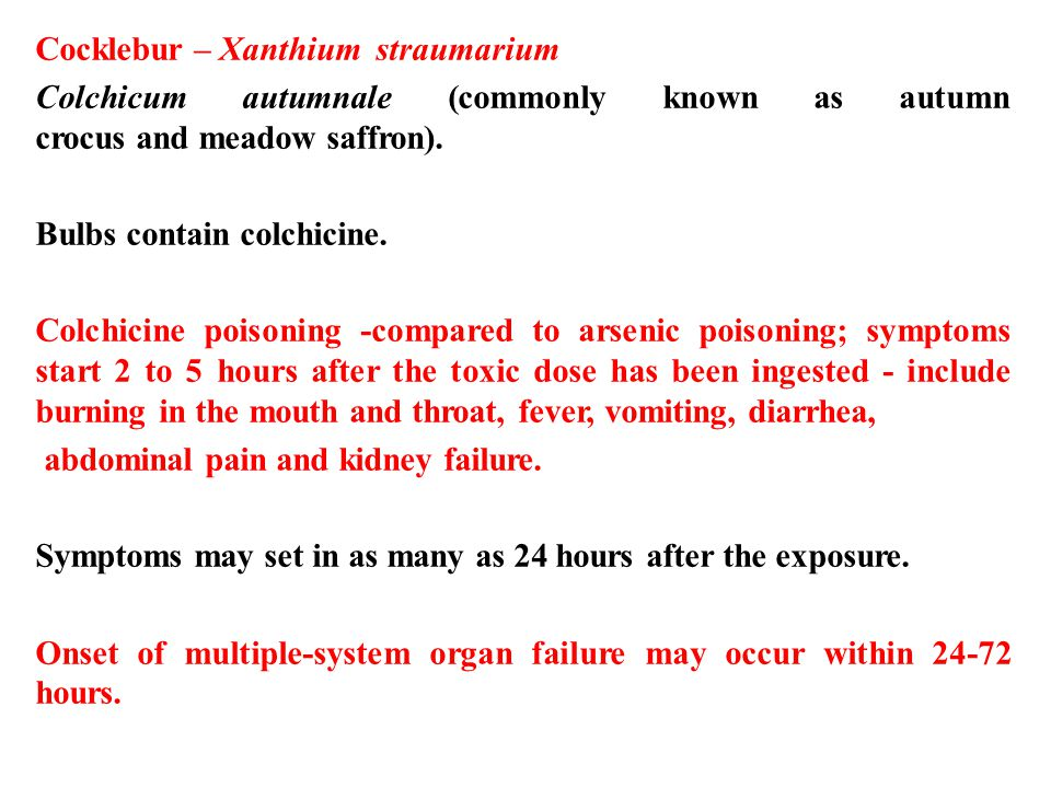 Cocklebur – Xanthium straumarium