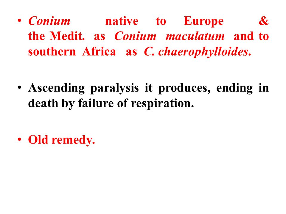 Conium native to Europe & the Medit