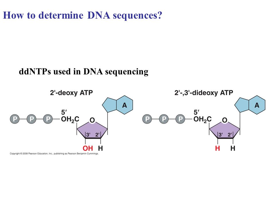How to determine DNA sequences