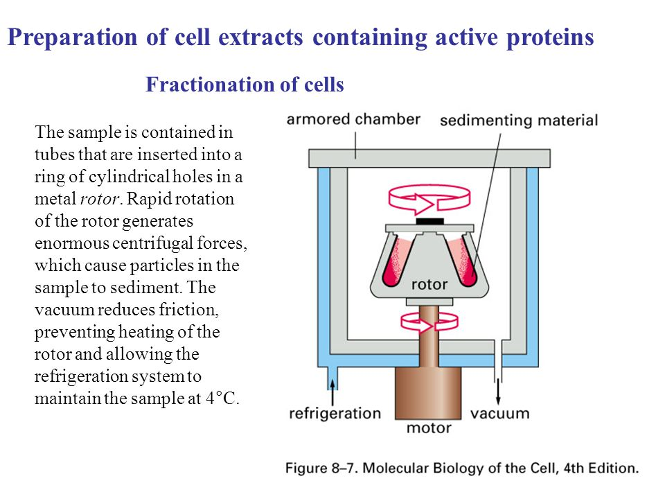 Preparation of cell extracts containing active proteins