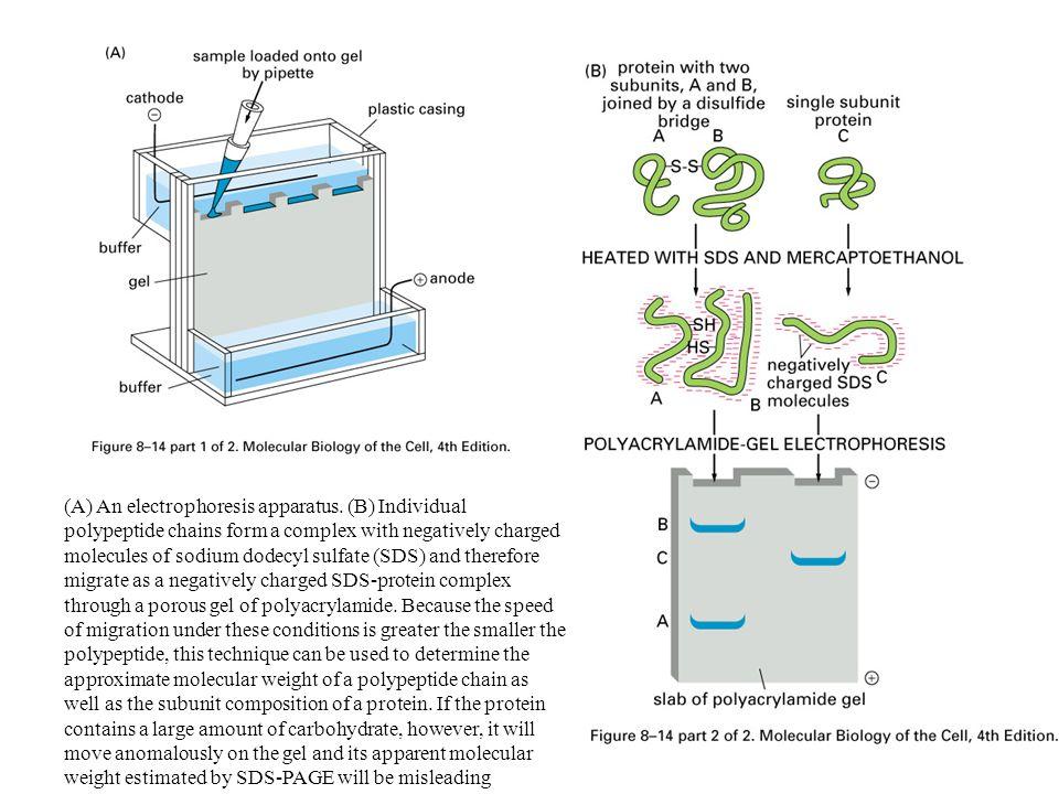 (A) An electrophoresis apparatus