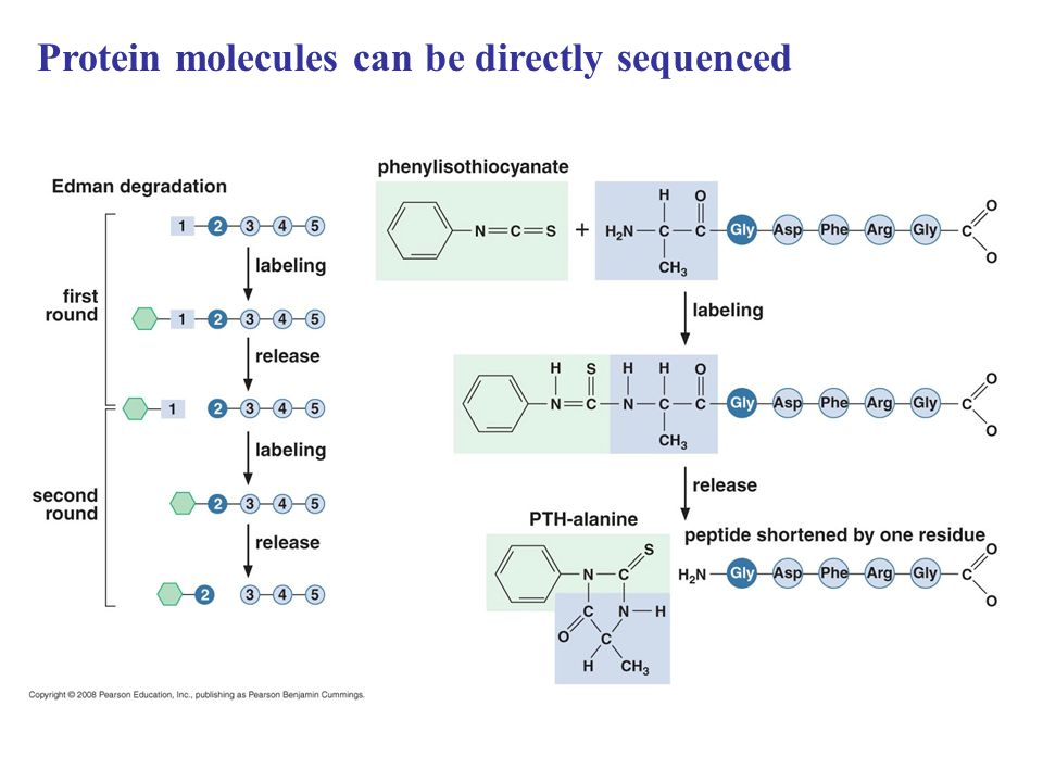 Protein molecules can be directly sequenced