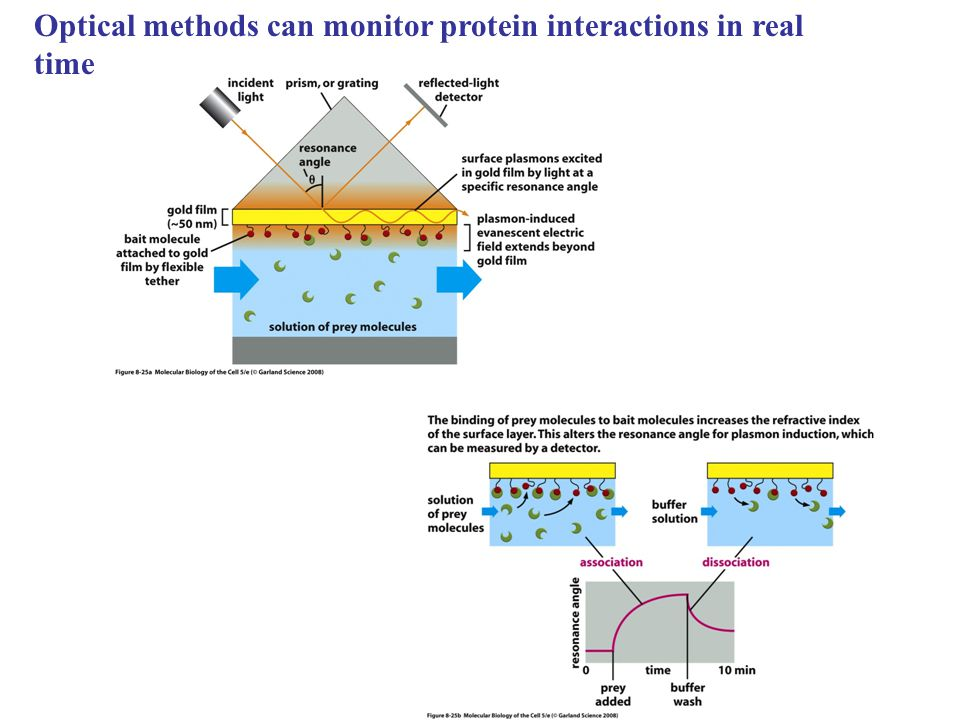 Optical methods can monitor protein interactions in real time