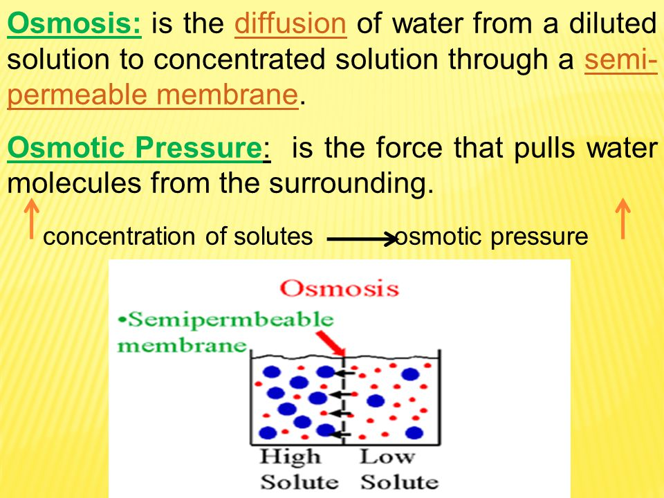 Osmosis: is the diffusion of water from a diluted solution to concentrated solution through a semi-permeable membrane.