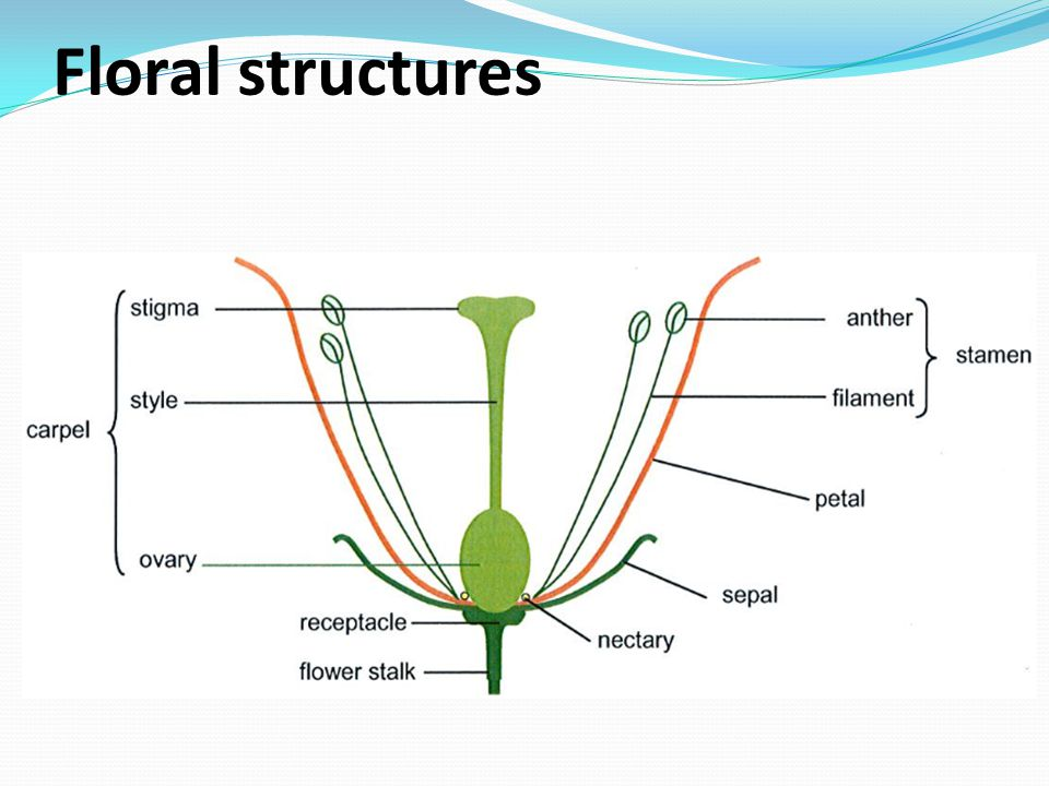 Floral structures