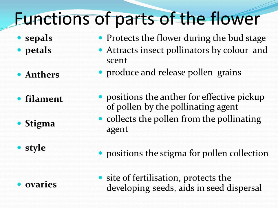 Functions of parts of the flower
