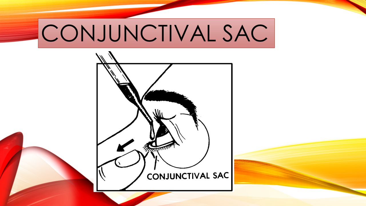 CONJUNCTIVAL SAC