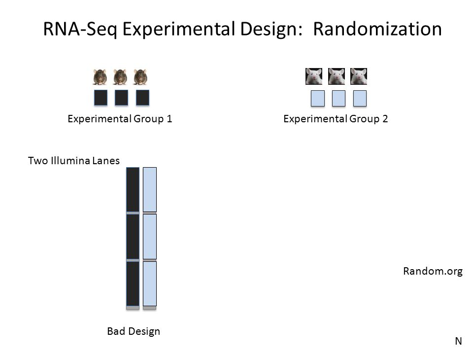 RNA-Seq Experimental Design: Randomization