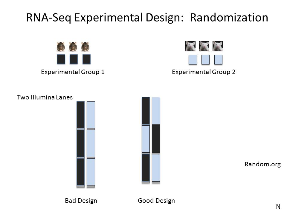 RNA-Seq Experimental Design: Randomization