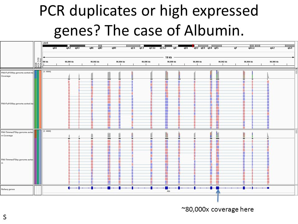 PCR duplicates or high expressed genes The case of Albumin.