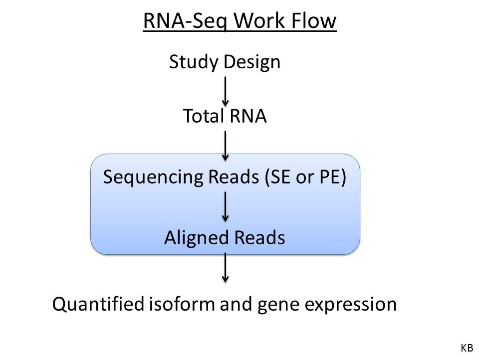 RNA-Seq Work Flow Study Design Total RNA Sequencing Reads (SE or PE)
