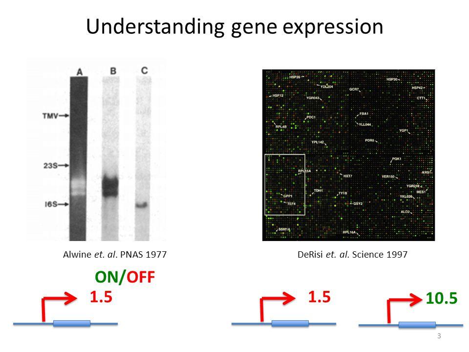 Understanding gene expression