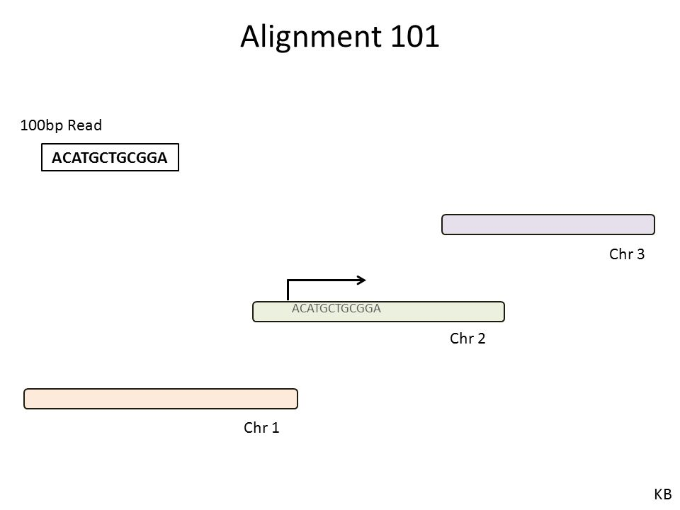 Alignment 101 100bp Read ACATGCTGCGGA Chr 3 ACATGCTGCGGA Chr 2 Chr 1