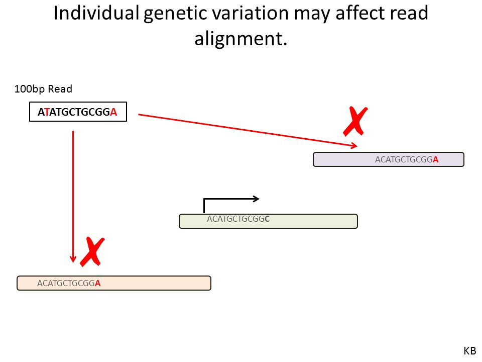Individual genetic variation may affect read alignment.
