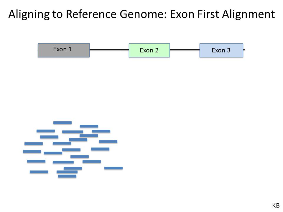 Aligning to Reference Genome: Exon First Alignment