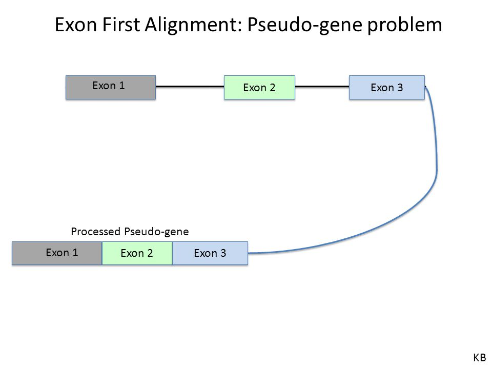 Exon First Alignment: Pseudo-gene problem