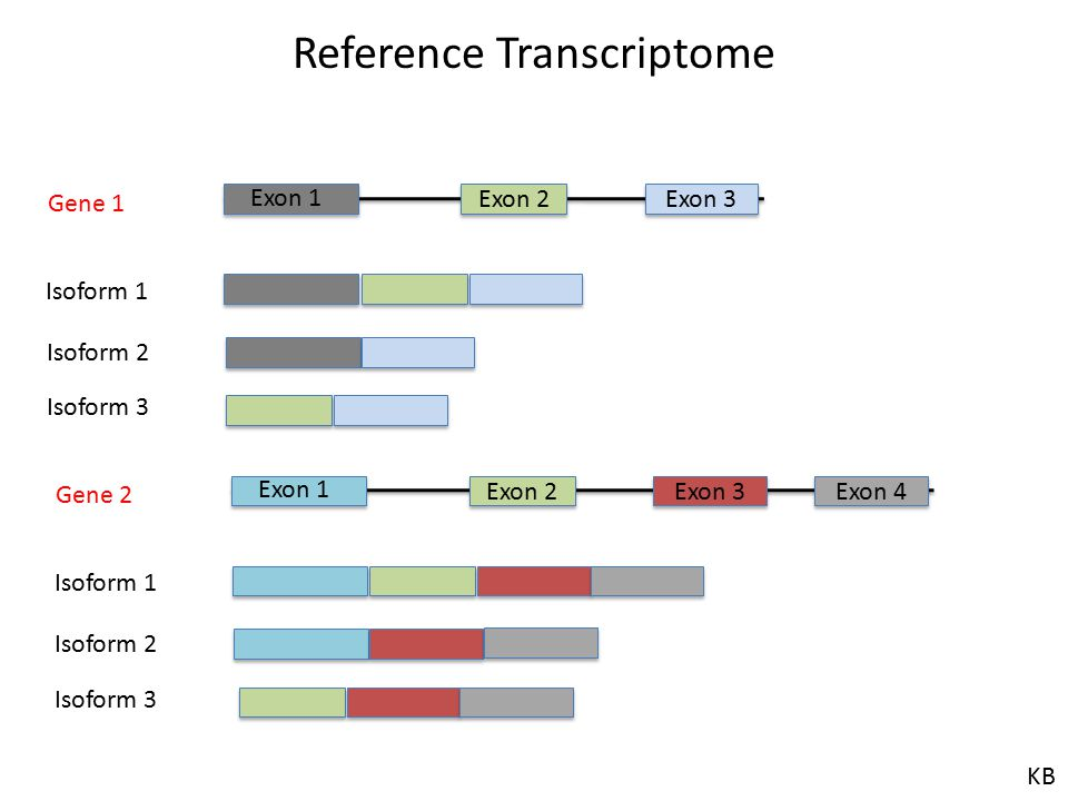 Reference Transcriptome