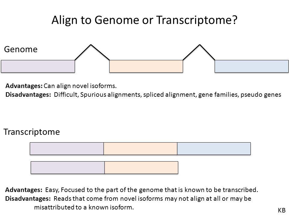 Align to Genome or Transcriptome