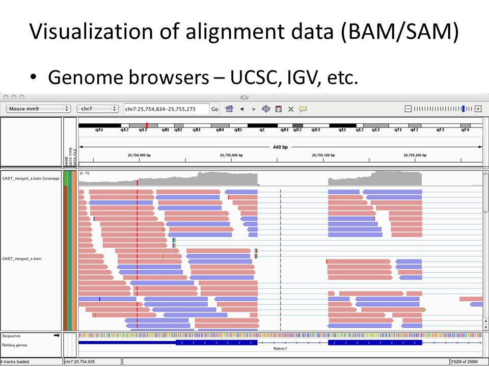 Visualization of alignment data (BAM/SAM)