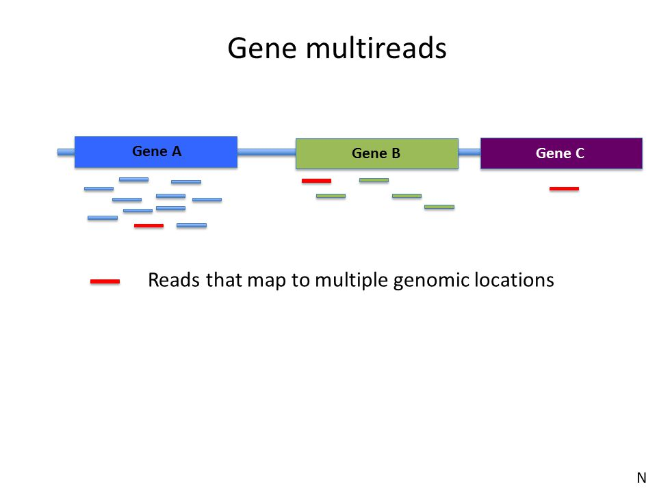 Gene multireads Reads that map to multiple genomic locations Gene A