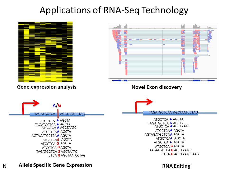 Applications of RNA-Seq Technology
