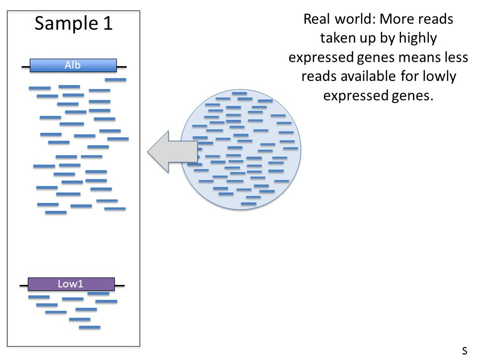 Sample 1 Real world: More reads taken up by highly expressed genes means less reads available for lowly expressed genes.