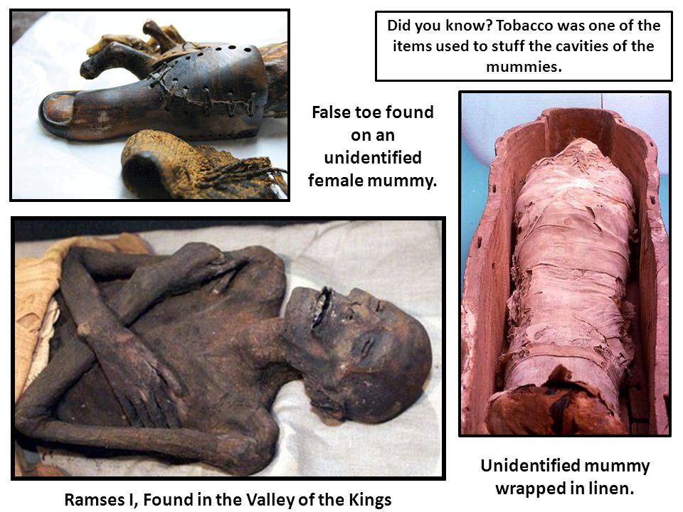 False toe found on an unidentified female mummy.