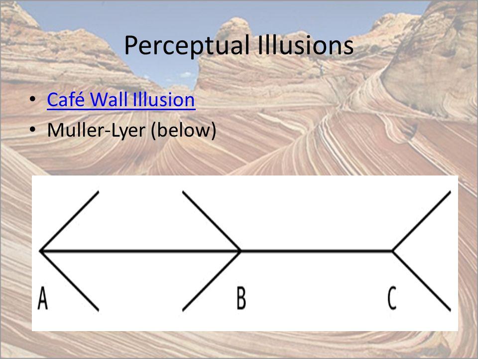 Perceptual Illusions Café Wall Illusion Muller-Lyer (below)