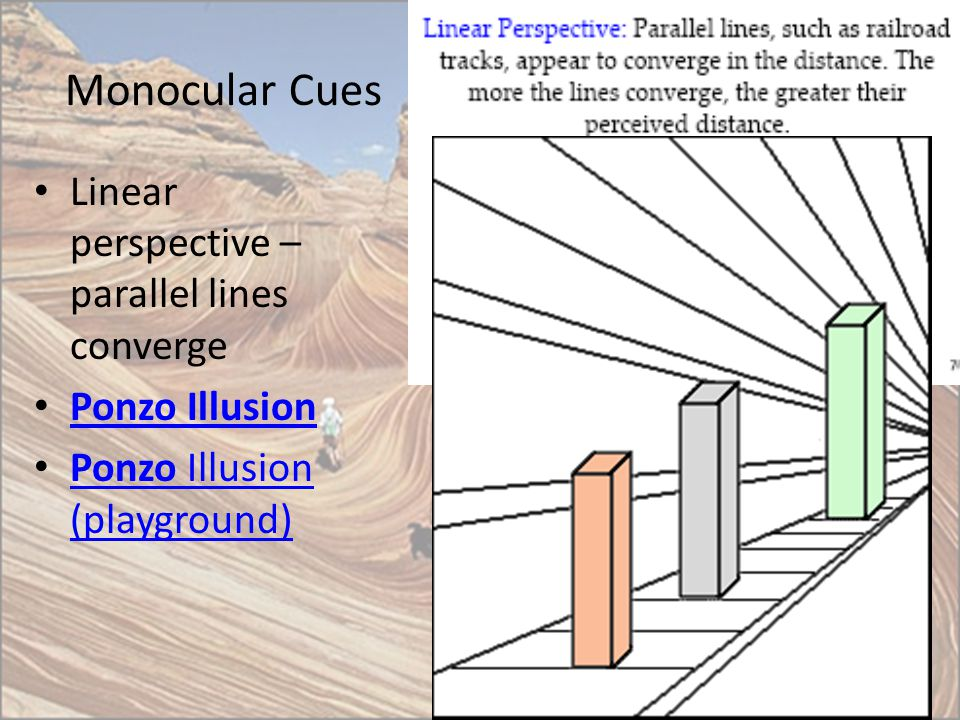 Monocular Cues Linear perspective – parallel lines converge