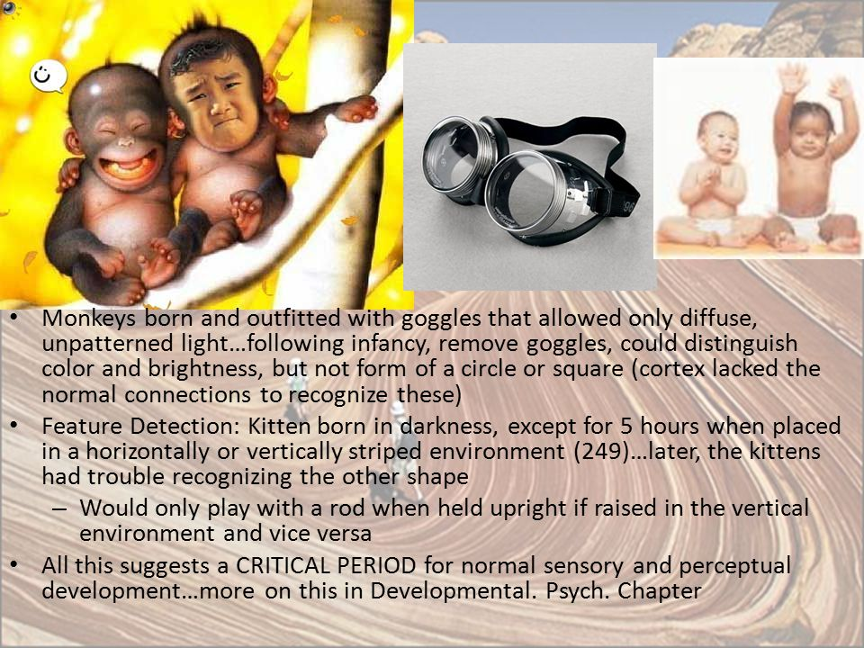 Monkeys born and outfitted with goggles that allowed only diffuse, unpatterned light…following infancy, remove goggles, could distinguish color and brightness, but not form of a circle or square (cortex lacked the normal connections to recognize these)