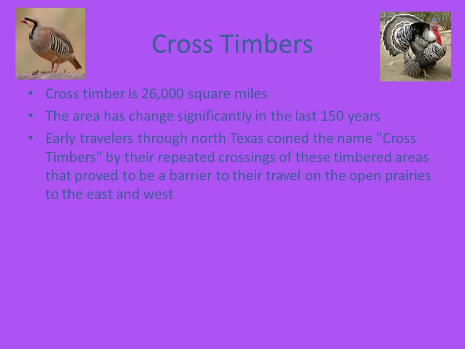 Cross Timbers Cross timber is 26,000 square miles