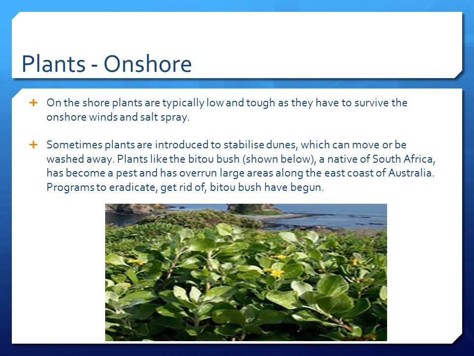 Plants - Onshore On the shore plants are typically low and tough as they have to survive the onshore winds and salt spray.
