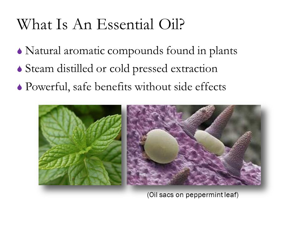 (Oil sacs on peppermint leaf)