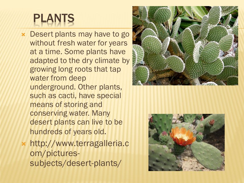 PLANTS http://www.terragalleria.com/pictures-subjects/desert-plants/