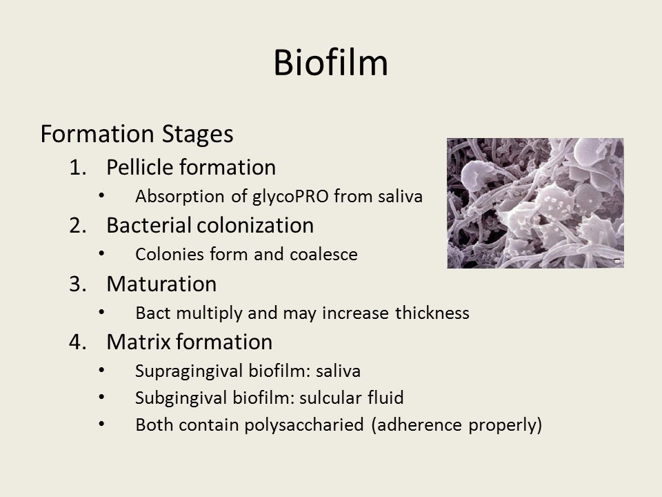 Biofilm Formation Stages Pellicle formation Bacterial colonization
