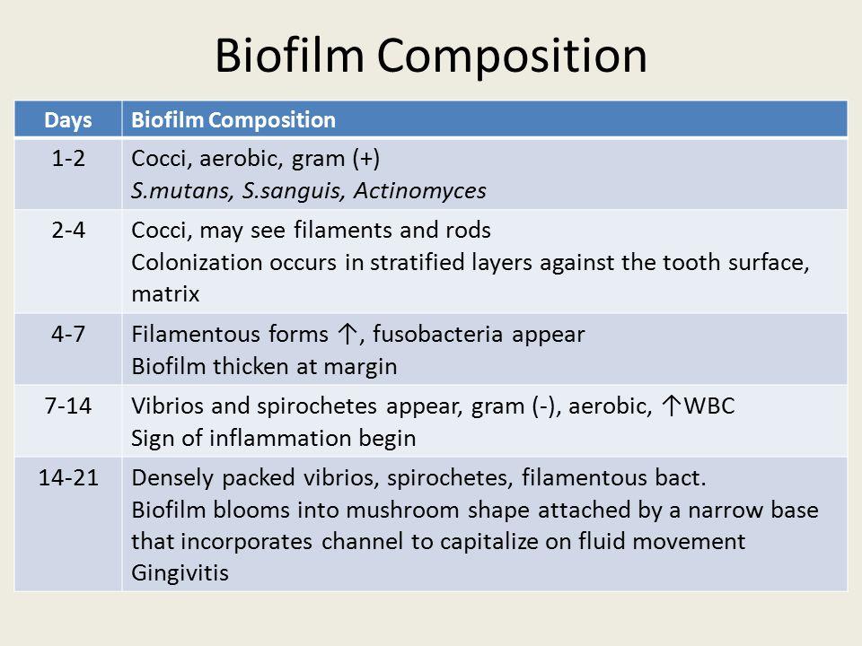 Biofilm Composition 1-2 Cocci, aerobic, gram (+)