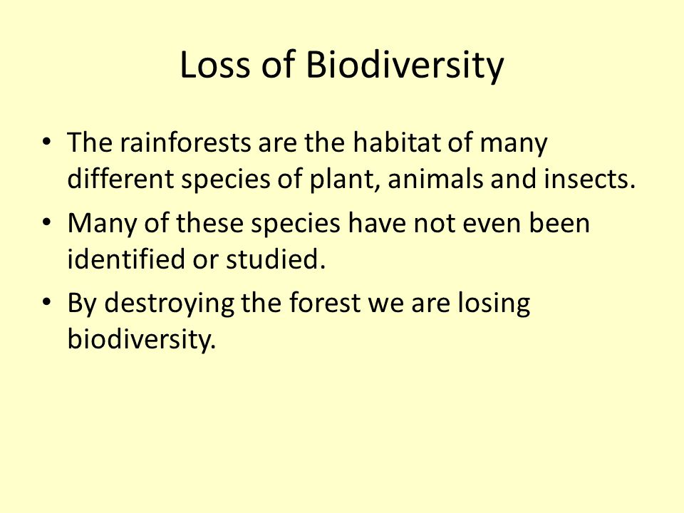 Loss of Biodiversity The rainforests are the habitat of many different species of plant, animals and insects.