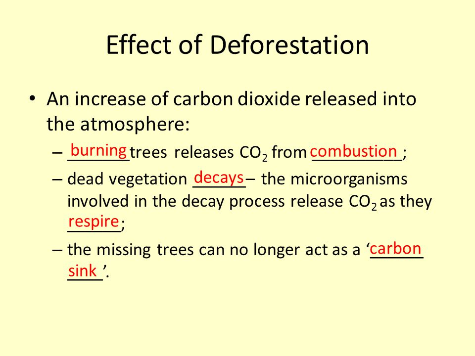 Effect of Deforestation