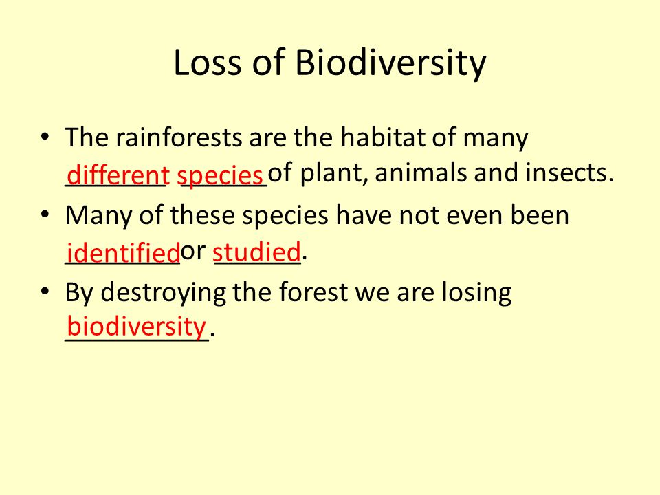 Loss of Biodiversity The rainforests are the habitat of many _______ ______of plant, animals and insects.