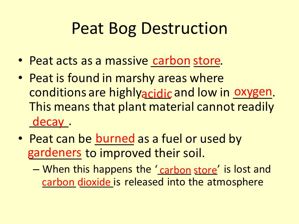 Peat Bog Destruction carbon store Peat acts as a massive ______ ____.