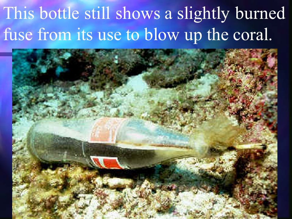 This bottle still shows a slightly burned fuse from its use to blow up the coral.